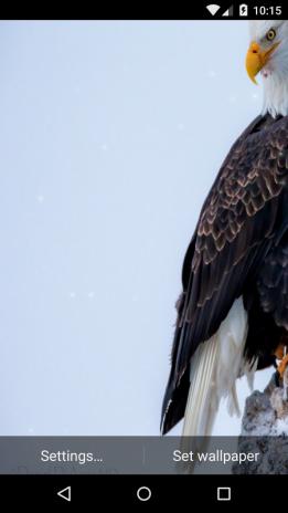 Eagle Live Wallpaper Hd Screenshot 5