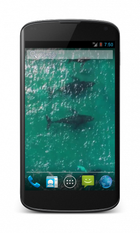 Whales Free Video Wallpaper 14 Descargar Apk Para Android