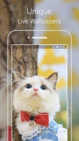 Kucing Lucu Live Wallpaper 1 0 Unduh Apk Android Aptoide