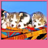 Cute Puppies Live Wallpapers Icon