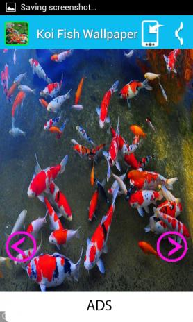 Koi Fish Wallpaper Screenshot 3