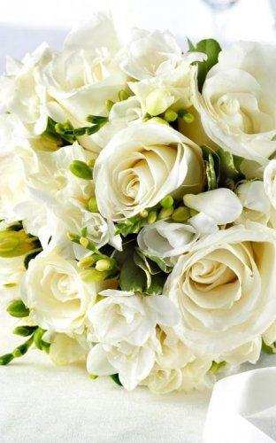 Hintergrundbilder weiße rosen 97 Hintergrundbilder