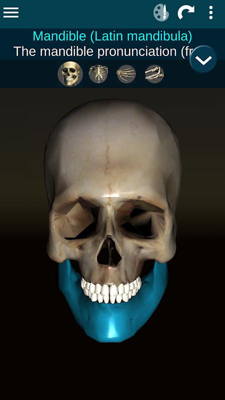 Sistema Osseous 3D (Anatomia) screenshot 1