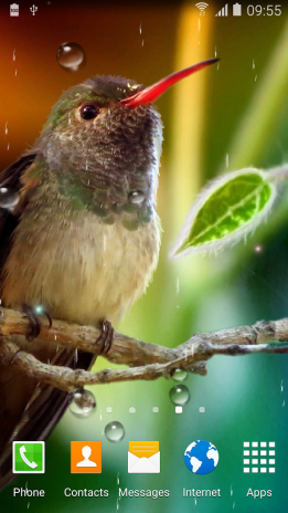 hummingbirds live wallpaper 1 0 2 download apk for android aptoide