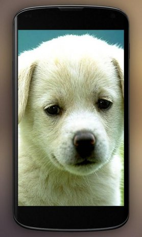 Puppy Hd Live Wallpaper Screenshot 3