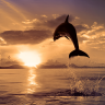 Dolphins Live Wallpapers Icon