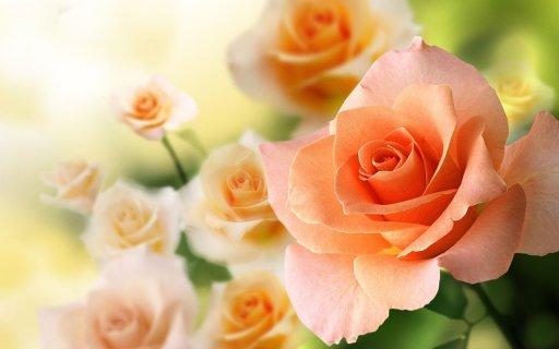 Unduh 4000 Wallpaper Bunga Cantik Bergerak  Paling Baru