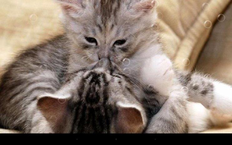 Funny Cat Live Wallpaper Screenshot 8