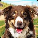 Dog Training: Dog Games 3D