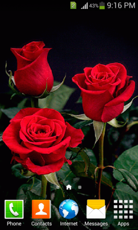 Rose Gif Live Wallpaper 10 Download Apk For Android Aptoide
