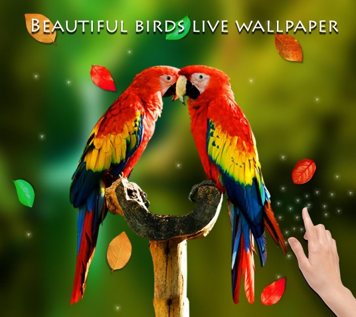 birds 3d live wallpaper download apk for android aptoide
