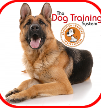 Dog Whisperer Training Methods