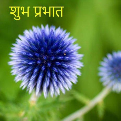 Good Morning Beautiful Flower Screenshot 1