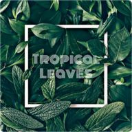 Tropical Leaves Wallpapers