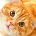 Katze Klingeltöne