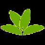 plantnet plant identification icon