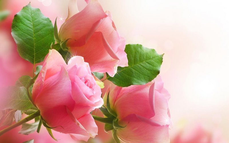 Flowers Live Wallpaper 22 0 Download Android Apk Aptoide