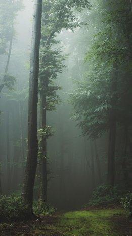 Dark Forest Live Wallpaper 1.0.2