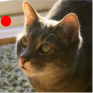 cat laser toy icon
