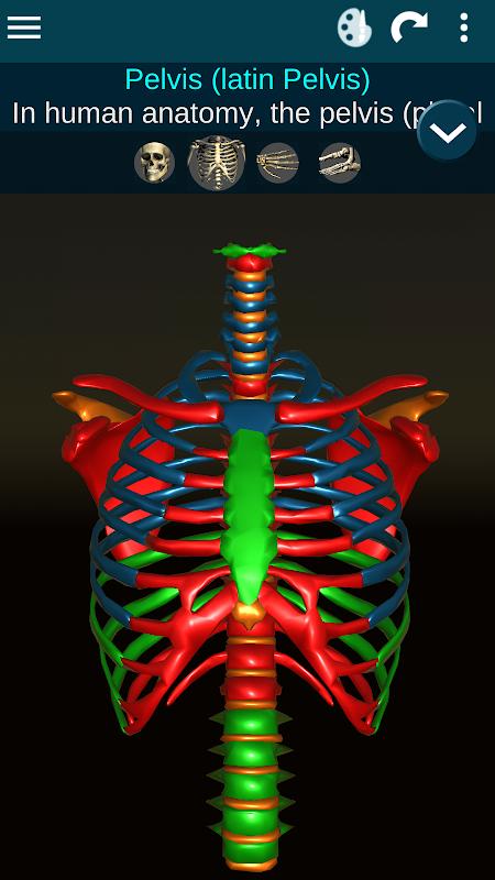 Sistema Osseous 3D (Anatomia) screenshot 2