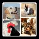 Animal Quiz - Guess Animal