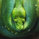 Reptile Wallpaper