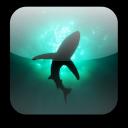 Shark Video Wallpaper Free