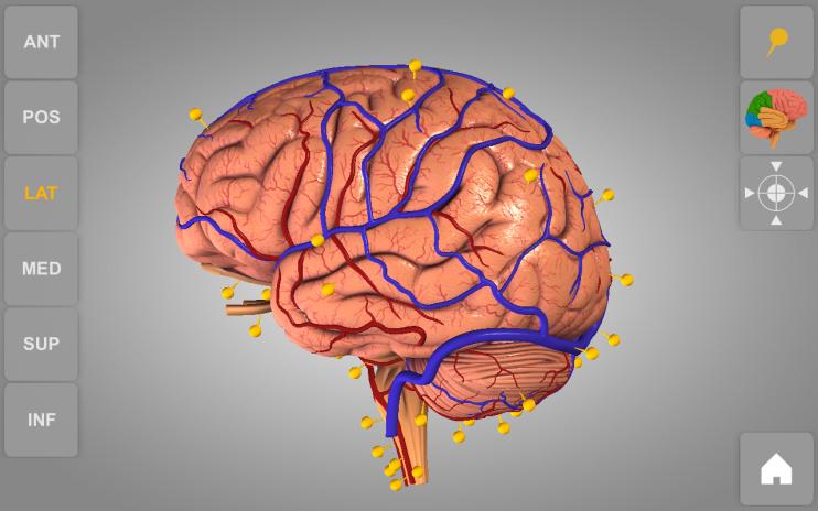 Brain 3D Anatomy Lite 1 0 3 Download APK for Android - Aptoide