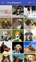 Dog Wallpapers HD Screen
