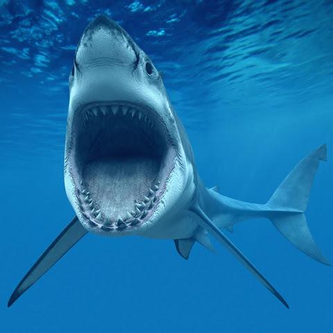Fondos de tiburones en movimiento