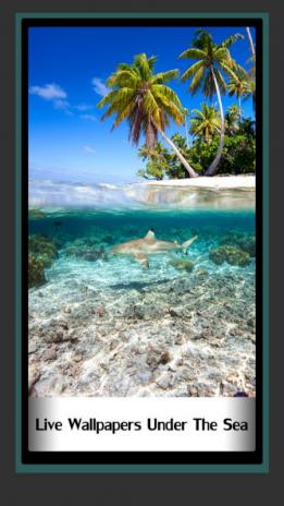 Wallpapers Hidup Di Bawah Laut 15 Muat Turun Apk Untuk