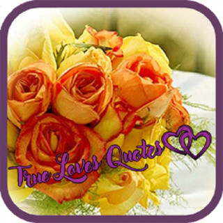 True Love Quotes Pure Love Quotes 1 0 Download APK for
