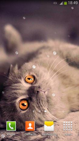 Cute Cats Live Wallpaper Screenshot 6
