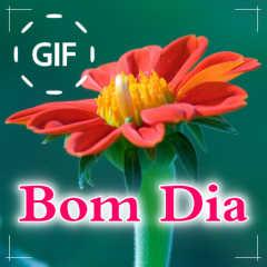 Portuguese Good Morning Good Day Gifs Images 1059 Download Apk For