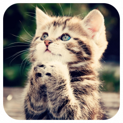 Cute Cat Live Wallpaper 1 12 Download Apk For Android Aptoide