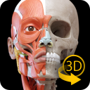 Muscular System - 3D Anatomy