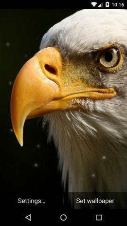 Eagle Live Wallpaper Hd Screenshot 7