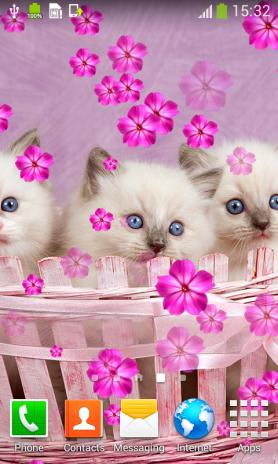 Kucing Comel Tinggal Wallpaper 1 6 Muat Turun Apk Untuk Android