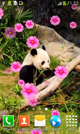 Lucu Panda Wallpaper Hidup 1 7 Unduh Apk Untuk Android Aptoide