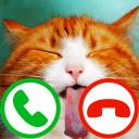 Gefälschte anruf katze 2