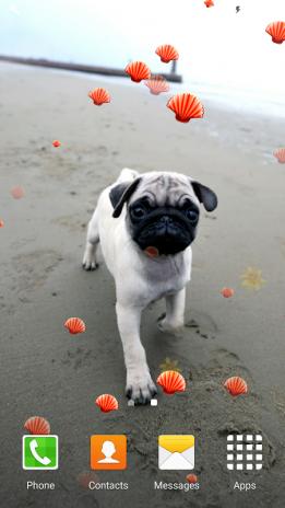 Cute Pugs Live Wallpapers Screenshot 6