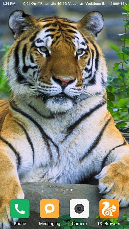 Вертикальные Обои На Телефон Тигр