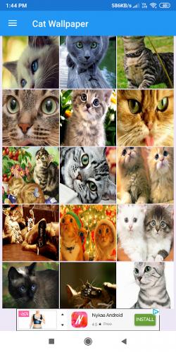 Cat Wallpaper 1 1 23 Download Android Apk Aptoide