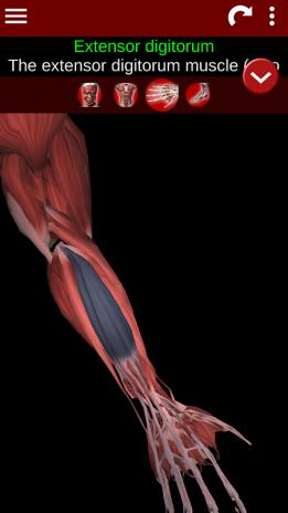 Sistema Muscular 3D (Anatomía) 2.0.3 Descargar APK para Android ...