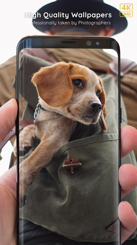 Puppy Wallpapers 4K PRO Puppy Backgrounds screenshot 1