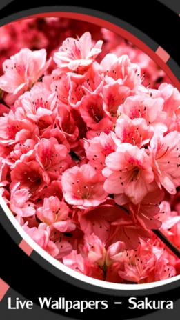 Live Wallpapers Sakura 1 5 Download Apk For Android Aptoide