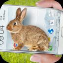 Bunny in Phone Cute joke