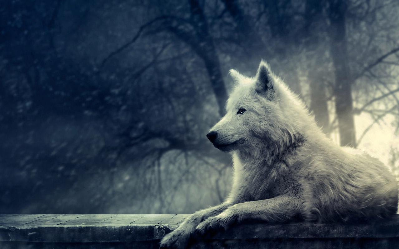 Старинные розы, картинки одинокий волк на рабочий стол