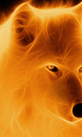 Wolf Wallpapers 26 Download Apk For Android Aptoide