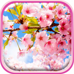Sakura Wallpaper 2 1 Download Apk For Android Aptoide